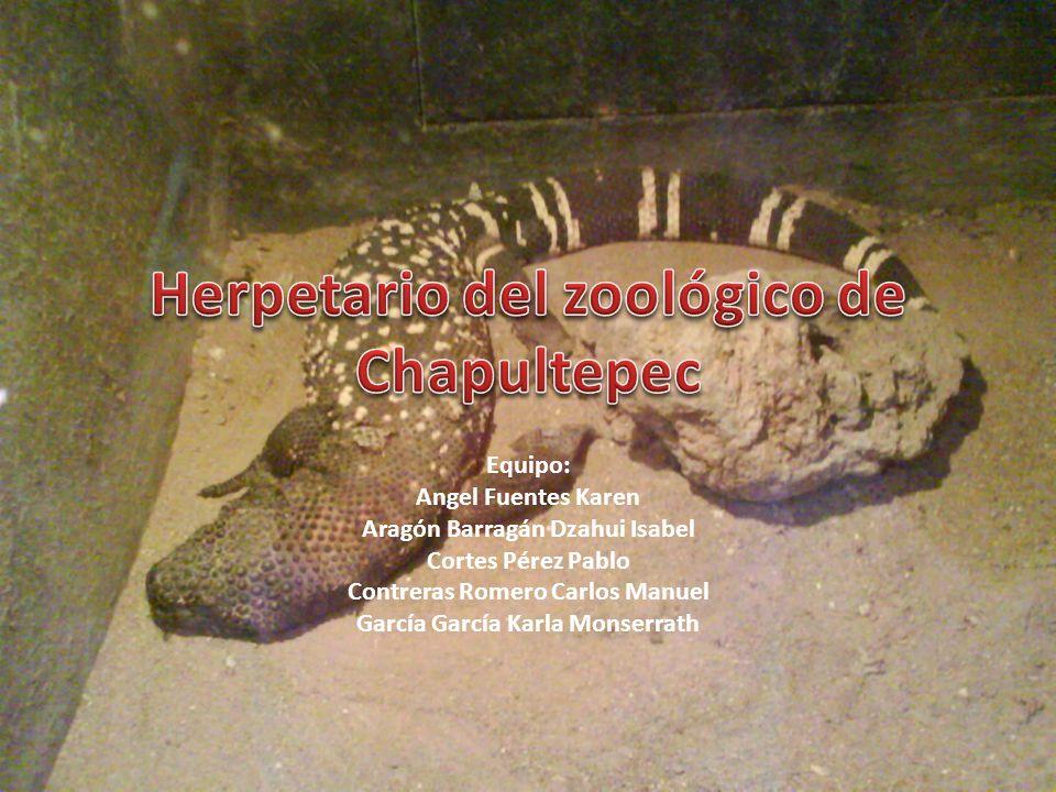 Herpetario del zoológico de Chapultepec