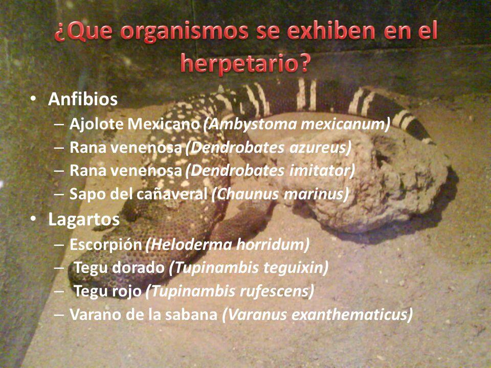 ¿Que organismos se exhiben en el herpetario