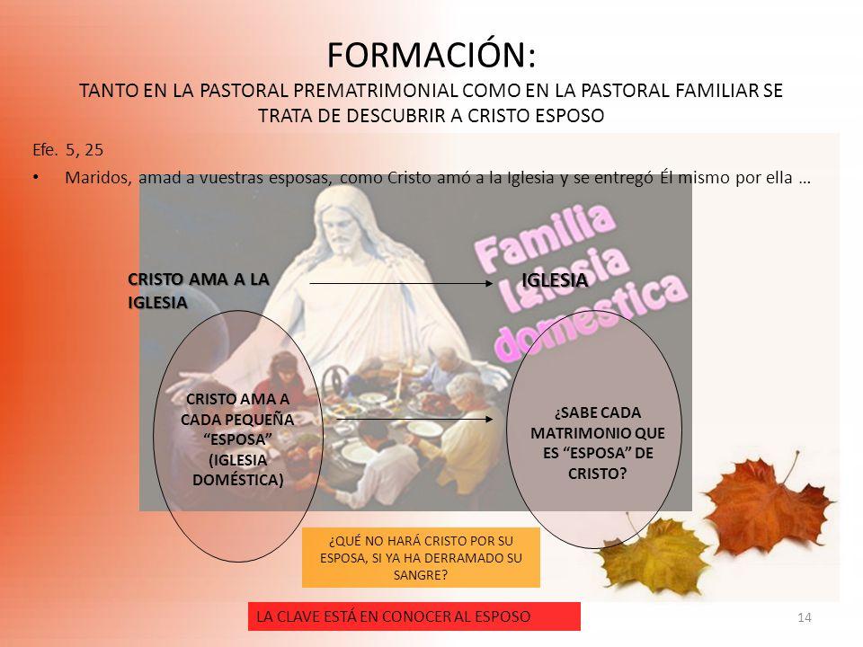FORMACIÓN: TANTO EN LA PASTORAL PREMATRIMONIAL COMO EN LA PASTORAL FAMILIAR SE TRATA DE DESCUBRIR A CRISTO ESPOSO