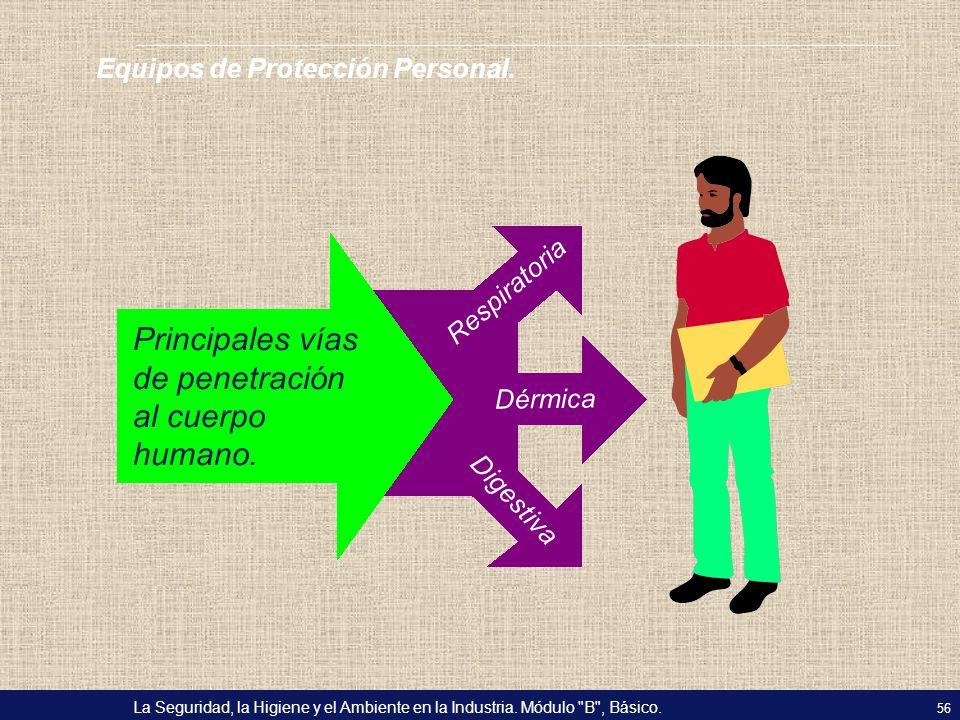 Principales vías de penetración al cuerpo humano.