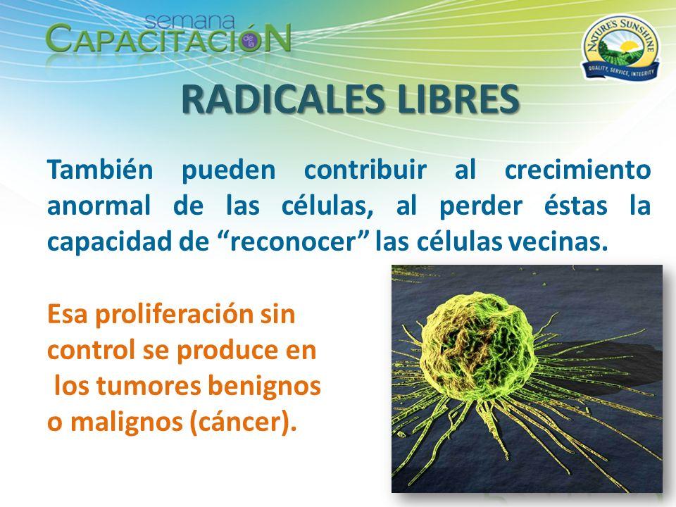 RADICALES LIBRES También pueden contribuir al crecimiento anormal de las células, al perder éstas la capacidad de reconocer las células vecinas.
