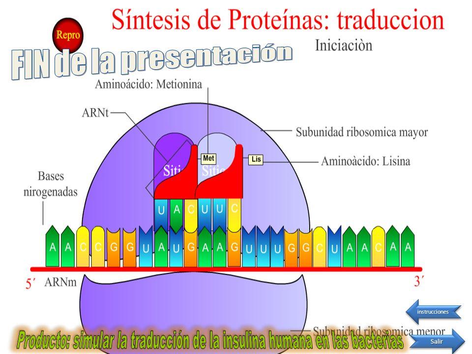 Producto: simular la traducción de la insulina humana en las bacterias