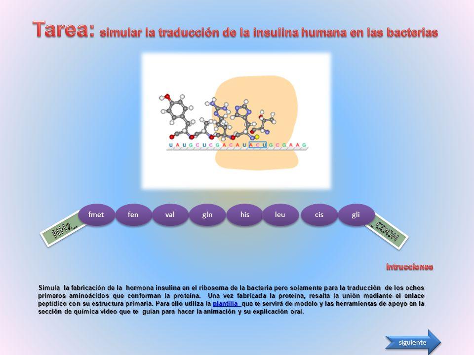 Tarea: simular la traducción de la insulina humana en las bacterias