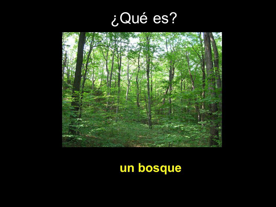 ¿Qué es un bosque