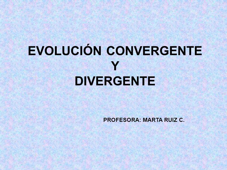 053db45235 EVOLUCIÓN CONVERGENTE Y DIVERGENTE - ppt video online descargar