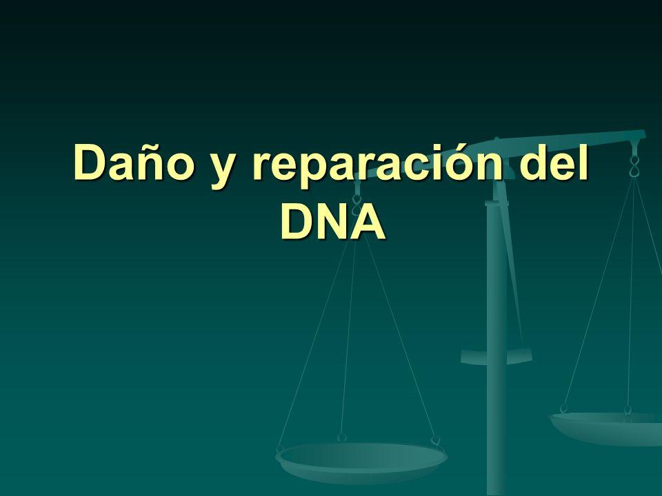 Daño y reparación del DNA