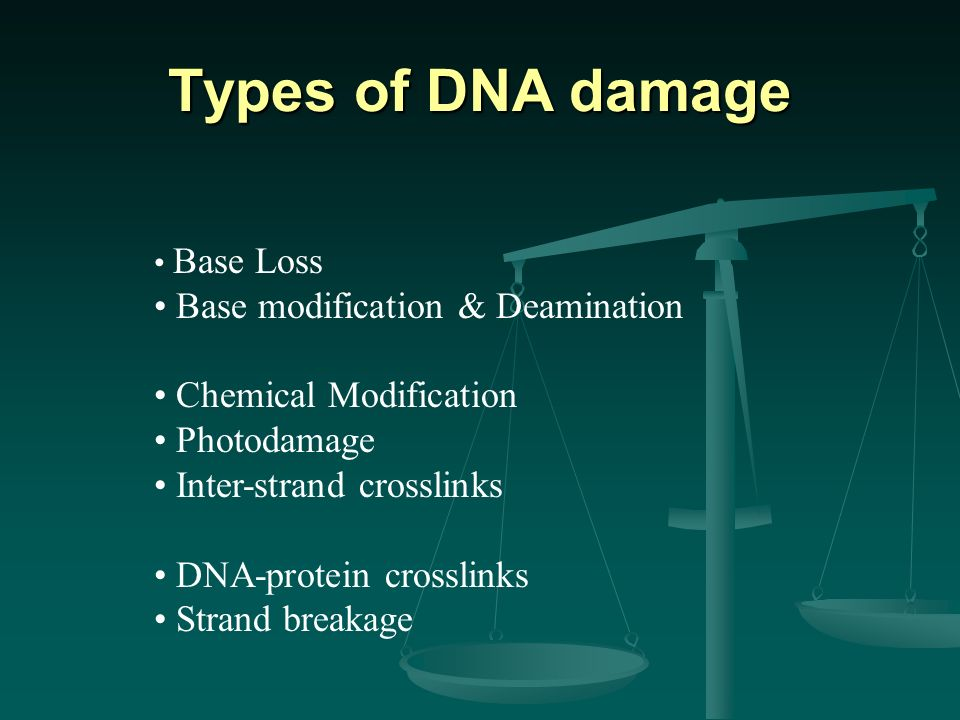 Types of DNA damage Base modification & Deamination