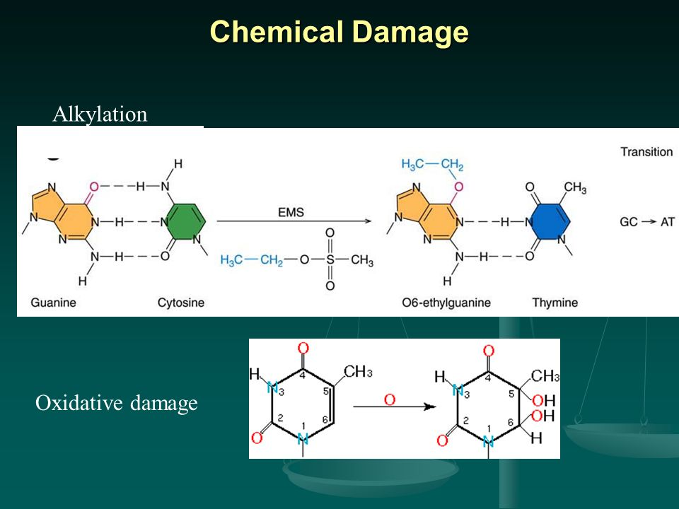 Chemical Damage Alkylation Oxidative damage Chemical modification