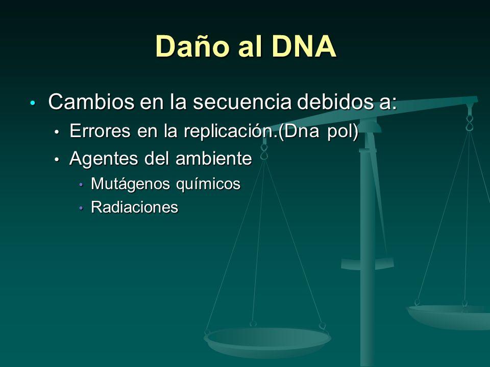 Daño al DNA Cambios en la secuencia debidos a: