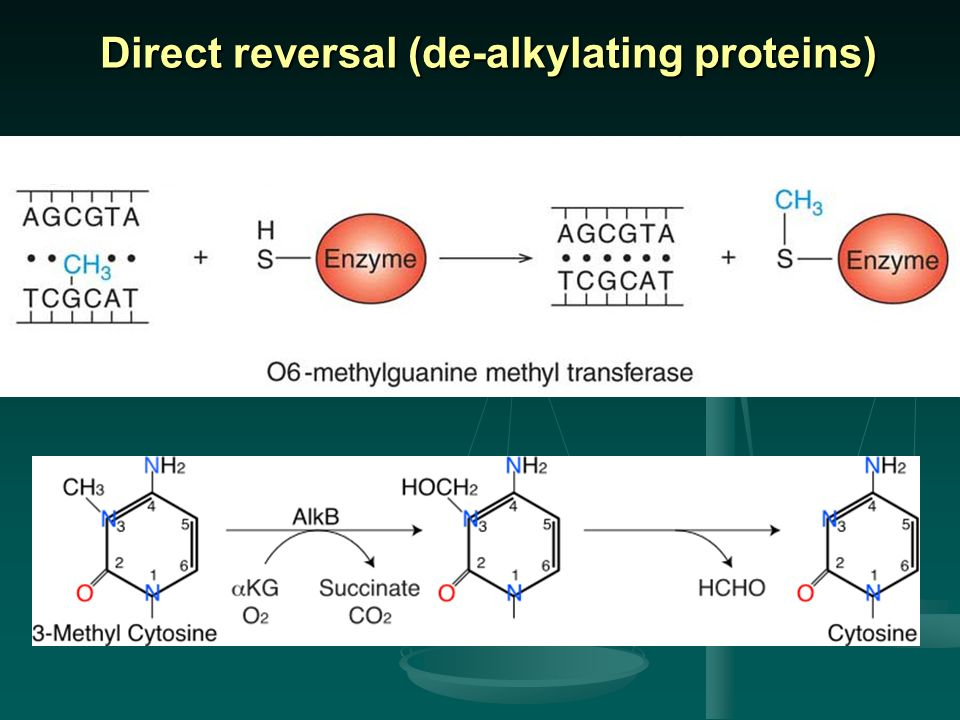Direct reversal (de-alkylating proteins)