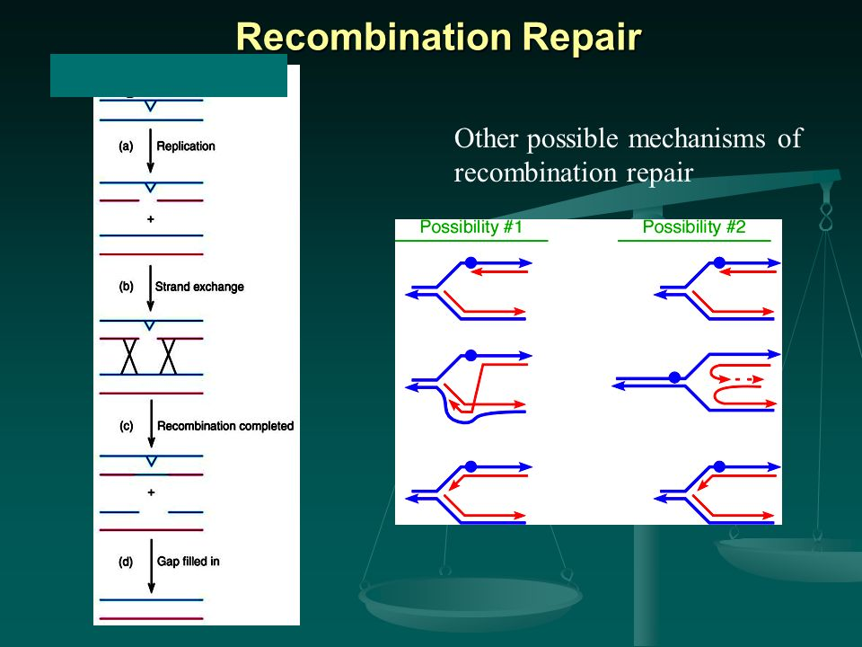 Recombination Repair Other possible mechanisms of recombination repair