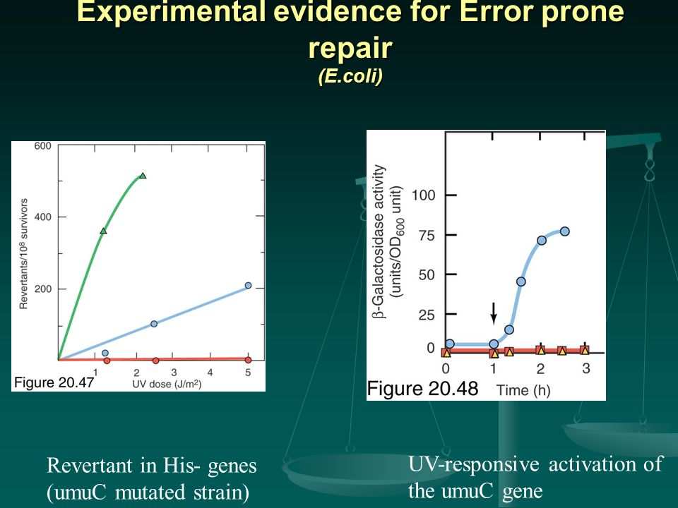 Experimental evidence for Error prone repair (E.coli)