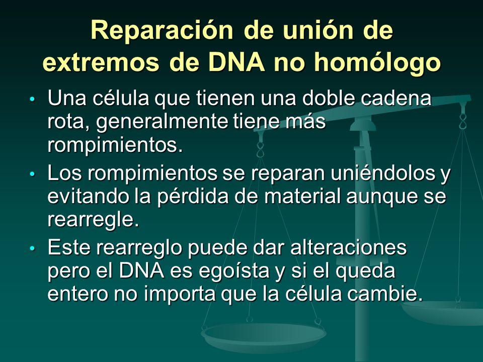 Reparación de unión de extremos de DNA no homólogo