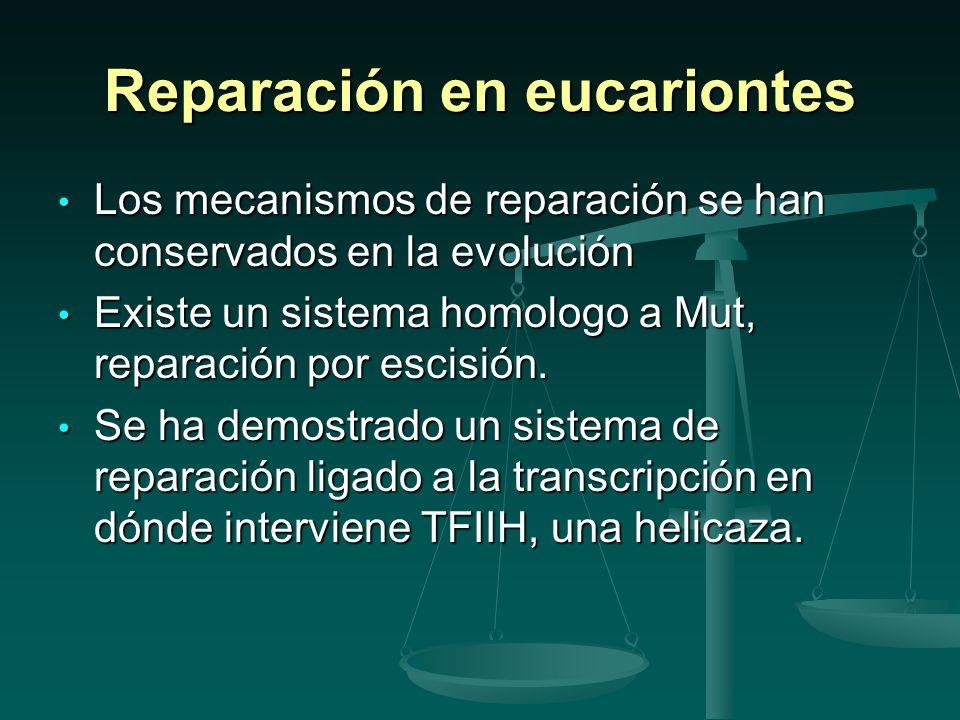 Reparación en eucariontes