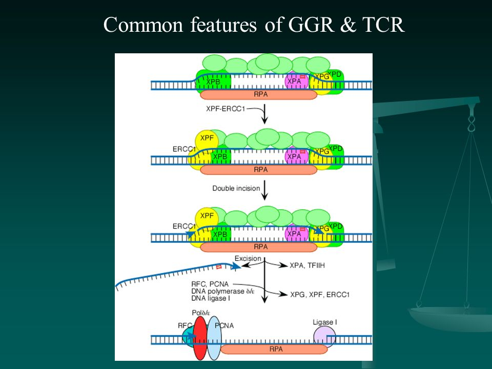 Common features of GGR & TCR