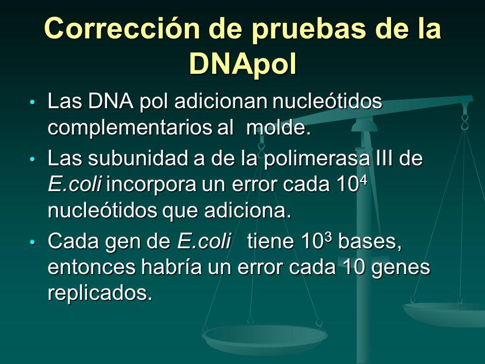 Corrección de pruebas de la DNApol