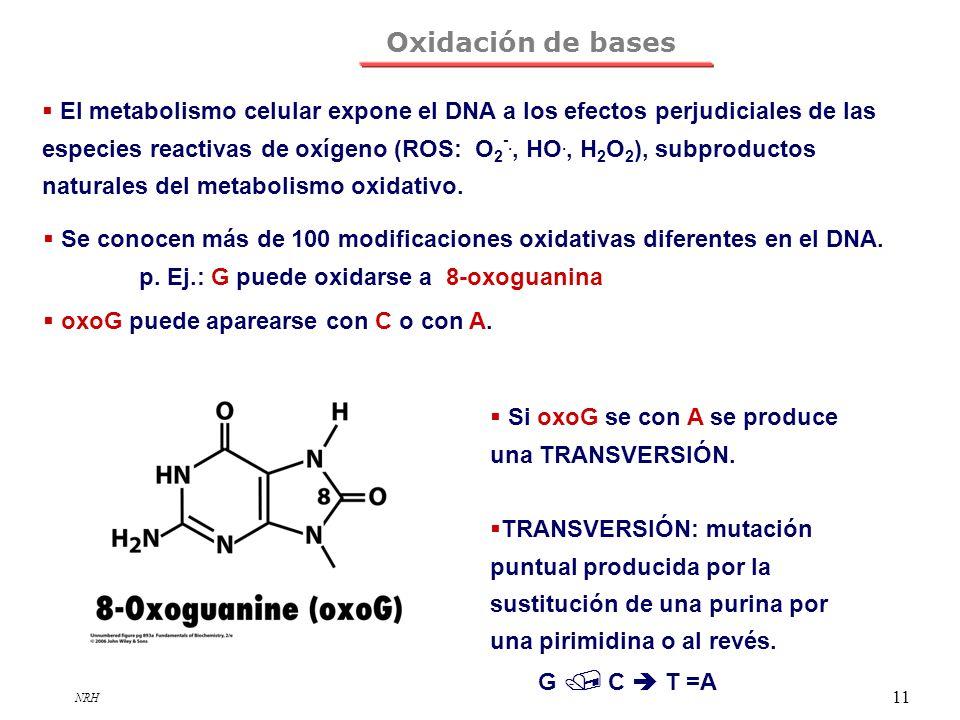 Oxidación de bases