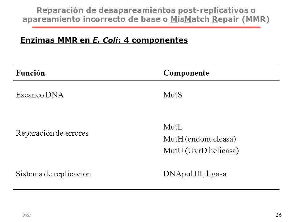 Sistema de replicación DNApol III; ligasa