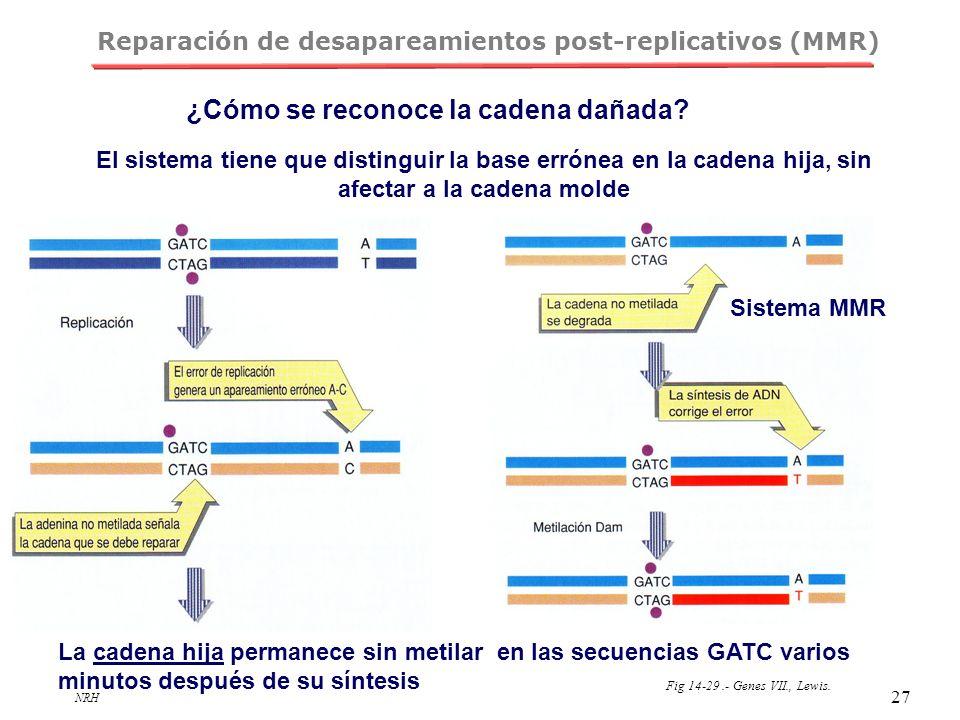 Reparación de desapareamientos post-replicativos (MMR)