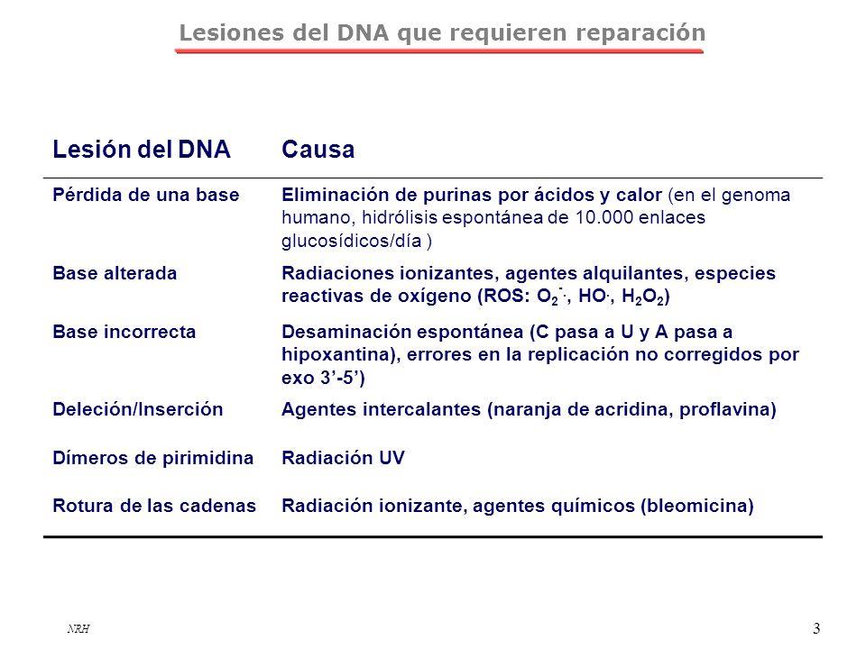 Lesiones del DNA que requieren reparación