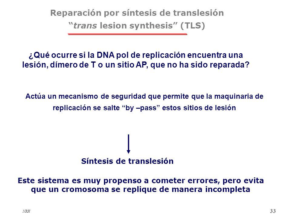 Reparación por síntesis de translesión trans lesion synthesis (TLS)