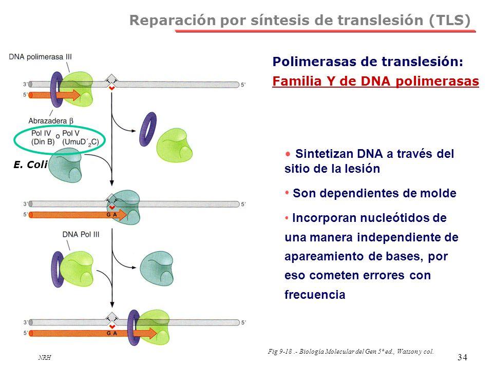 Reparación por síntesis de translesión (TLS)
