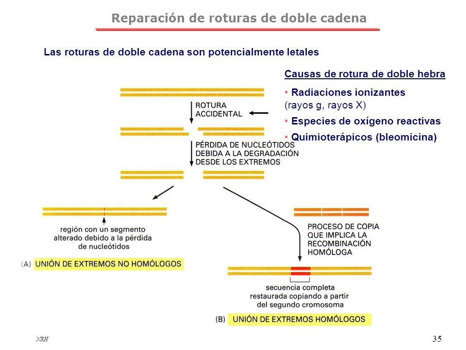 Reparación de roturas de doble cadena