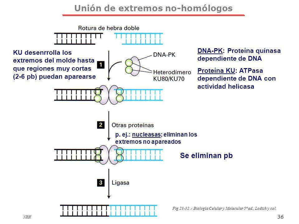 Unión de extremos no-homólogos