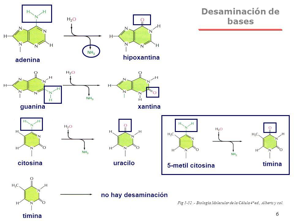 Desaminación de bases adenina hipoxantina guanina xantina citosina