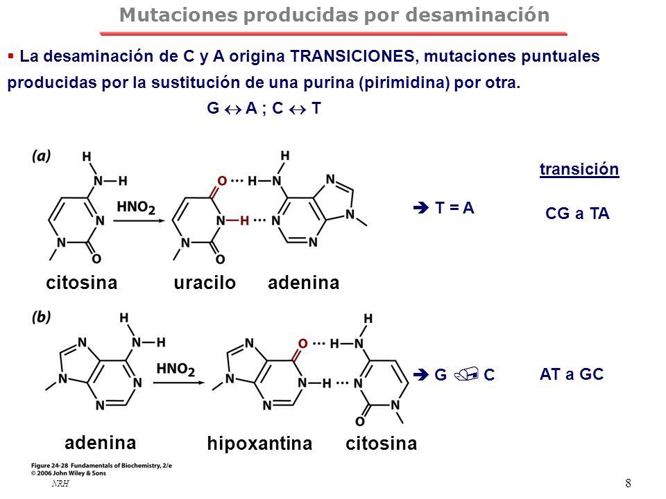 Mutaciones producidas por desaminación
