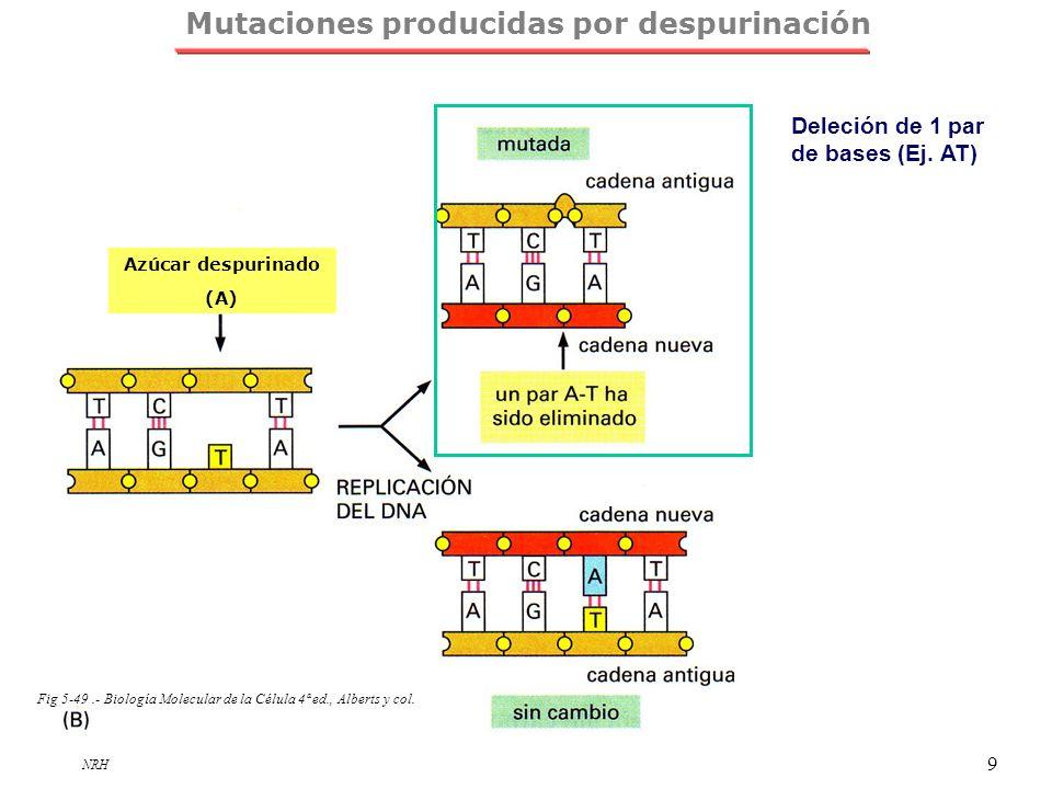 Mutaciones producidas por despurinación