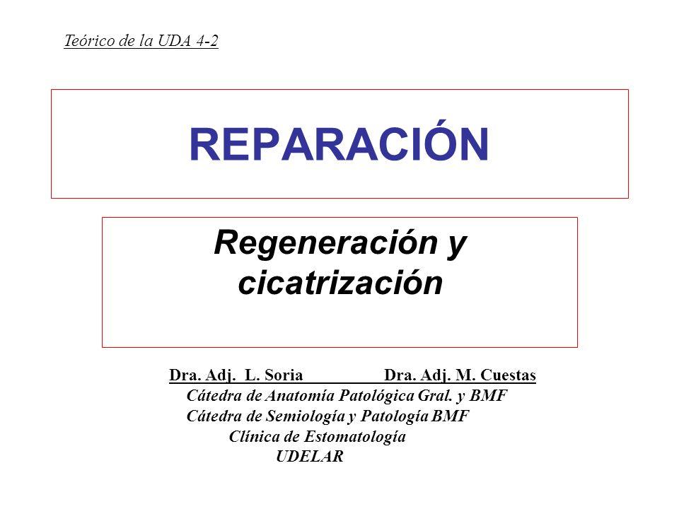 Regeneración y cicatrización