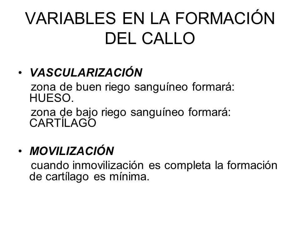 VARIABLES EN LA FORMACIÓN DEL CALLO