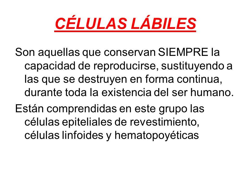 CÉLULAS LÁBILES