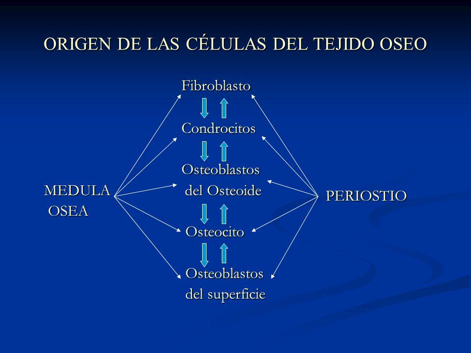 ORIGEN DE LAS CÉLULAS DEL TEJIDO OSEO