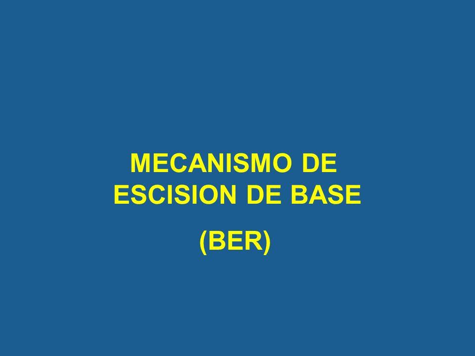 MECANISMO DE ESCISION DE BASE (BER)