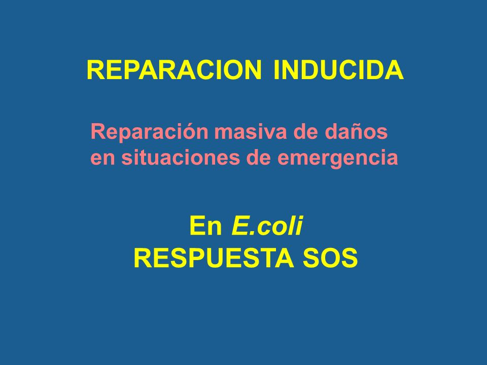 REPARACION INDUCIDA En E.coli RESPUESTA SOS Reparación masiva de daños