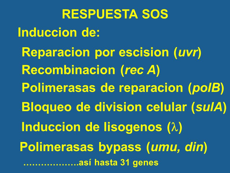 Reparacion por escision (uvr) Recombinacion (rec A)