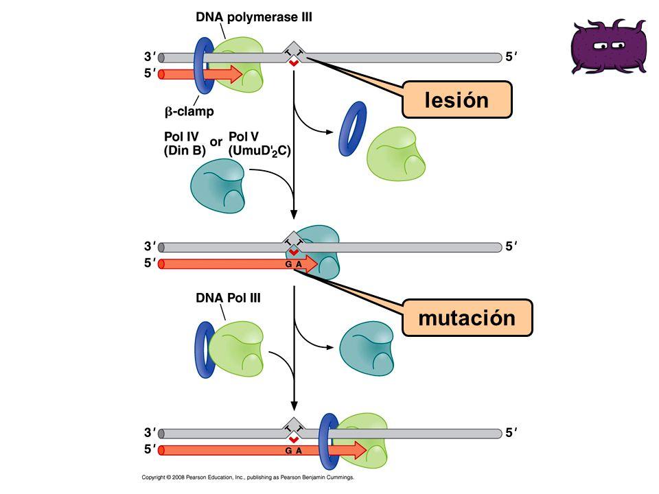 lesión mutación