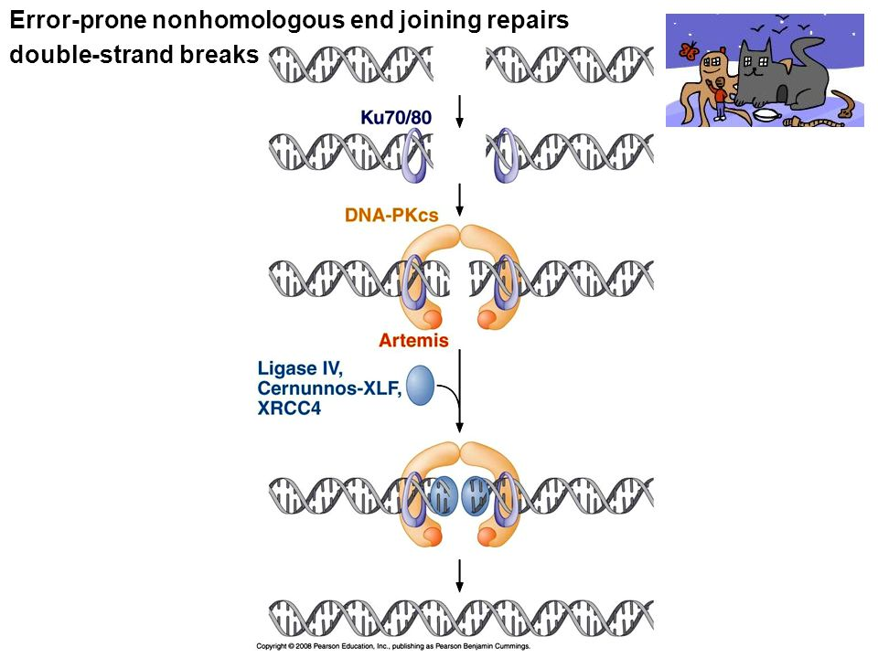 Error-prone nonhomologous end joining repairs