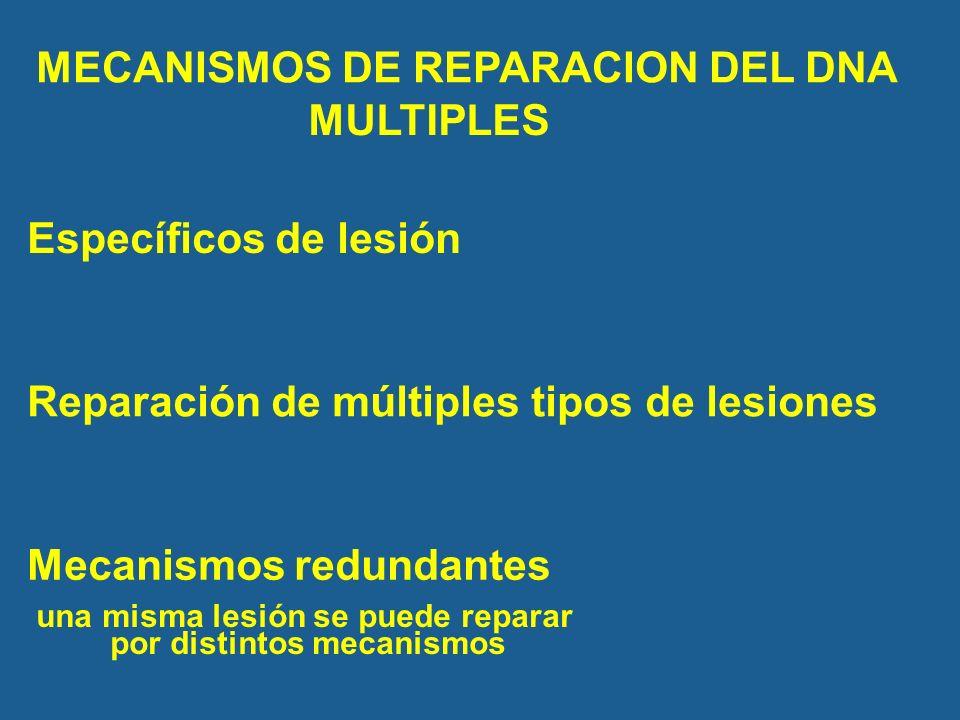 una misma lesión se puede reparar por distintos mecanismos
