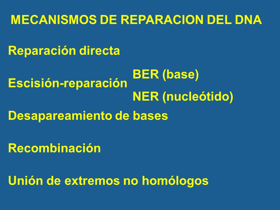 MECANISMOS DE REPARACION DEL DNA