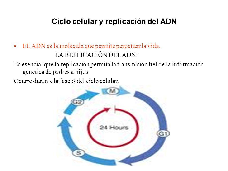 Ciclo celular y replicación del ADN