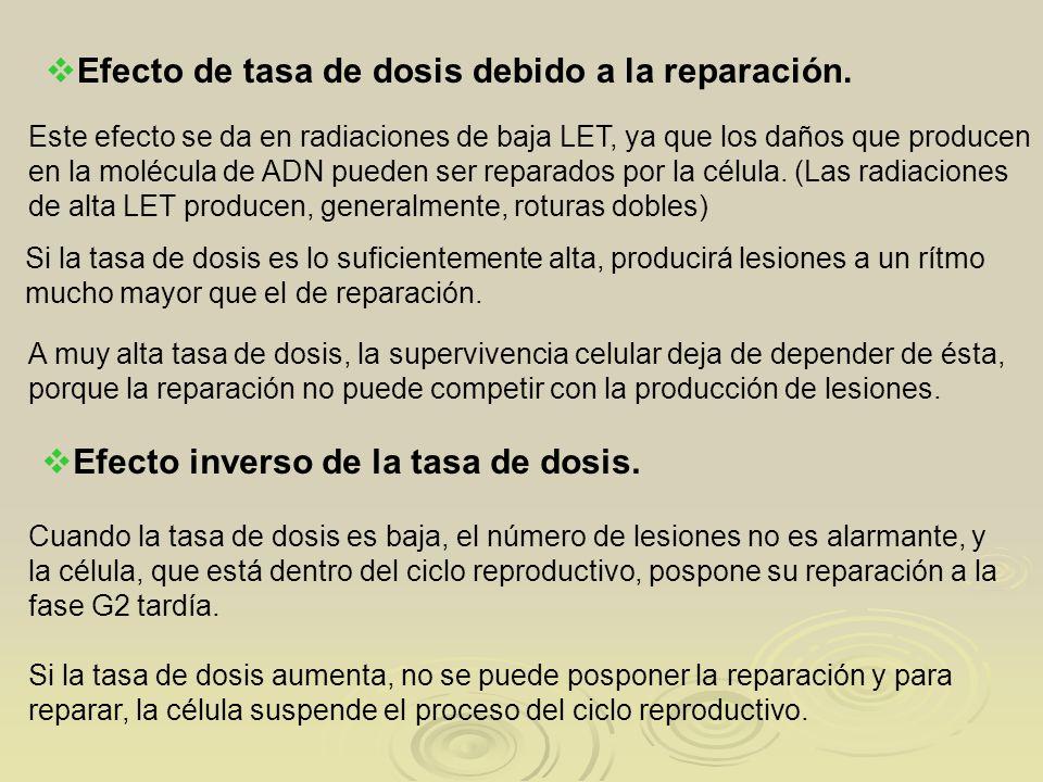 Efecto de tasa de dosis debido a la reparación.
