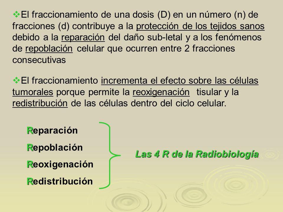 El fraccionamiento de una dosis (D) en un número (n) de fracciones (d) contribuye a la protección de los tejidos sanos debido a la reparación del daño sub-letal y a los fenómenos de repoblación celular que ocurren entre 2 fracciones consecutivas