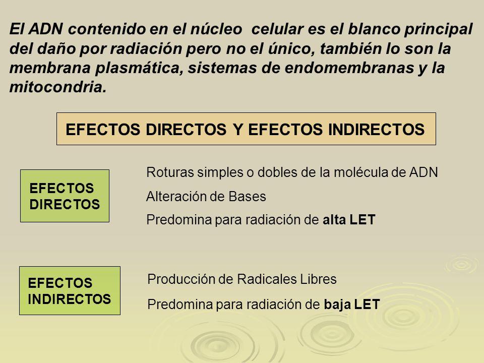 EFECTOS DIRECTOS Y EFECTOS INDIRECTOS