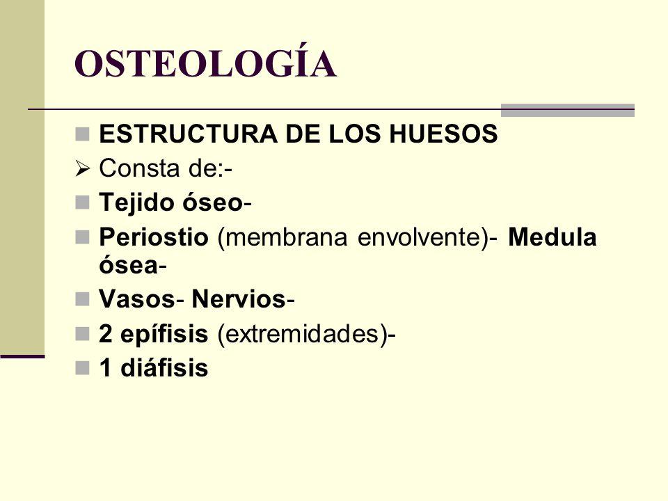 OSTEOLOGÍA ESTRUCTURA DE LOS HUESOS Consta de:- Tejido óseo-