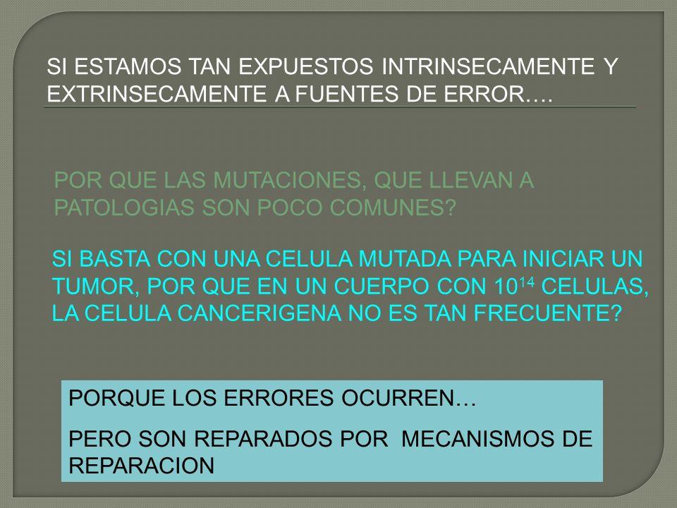 SI ESTAMOS TAN EXPUESTOS INTRINSECAMENTE Y EXTRINSECAMENTE A FUENTES DE ERROR….