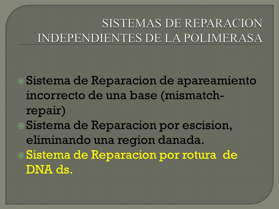 SISTEMAS DE REPARACION INDEPENDIENTES DE LA POLIMERASA