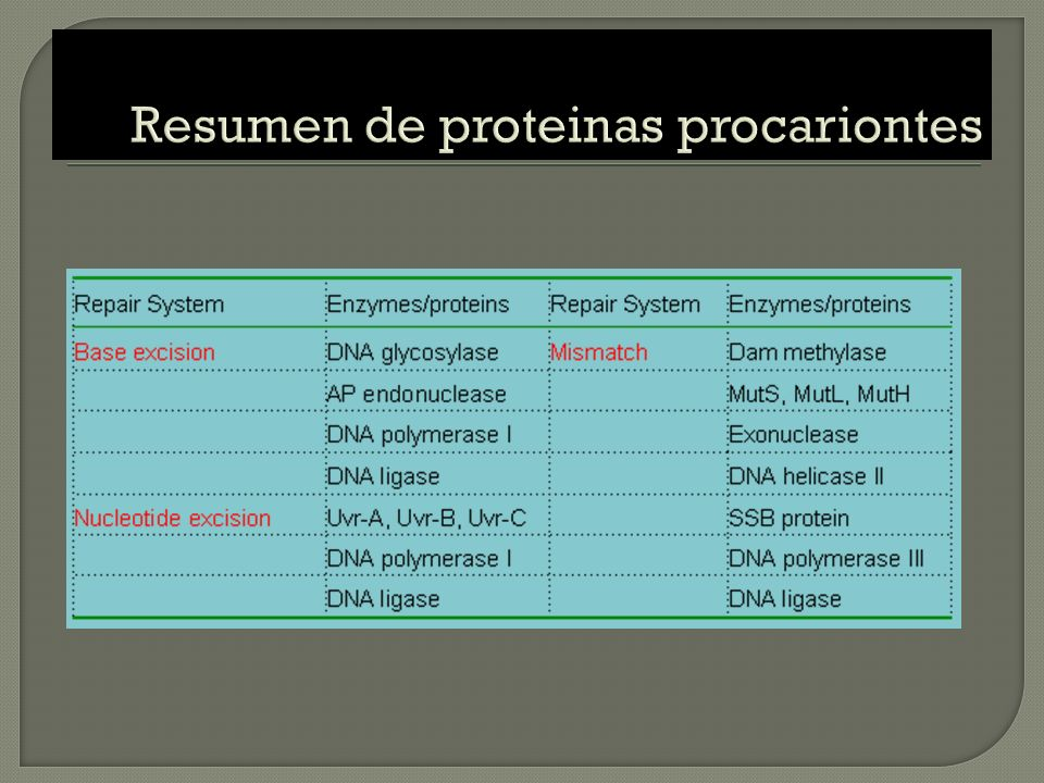 Resumen de proteinas procariontes